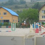 AER&Horses